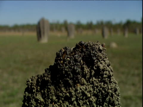 magnetic termites add mud to their mound - erezione video stock e b–roll