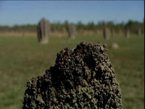 magnetic termites add mud to their mound - erektion stock-videos und b-roll-filmmaterial