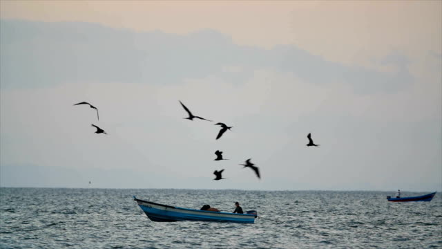 Magnificent frigatebird flying above the ocean and fishermen boat