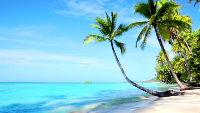magnificent tropical beach - palm tree stock videos & royalty-free footage