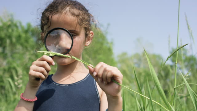 magnifying glass - biology stock videos & royalty-free footage