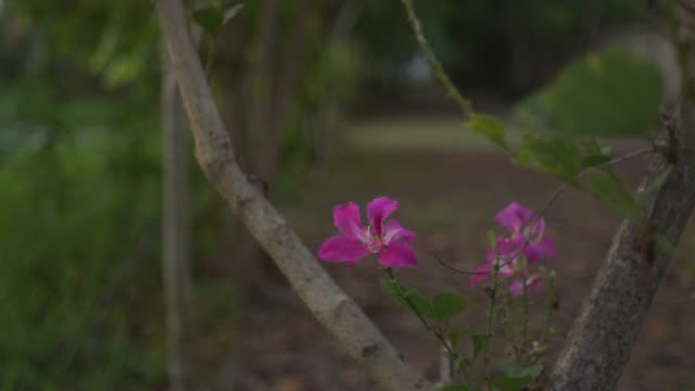 magnoliophyta flower ,purity in rural scene - morning glory stock videos & royalty-free footage