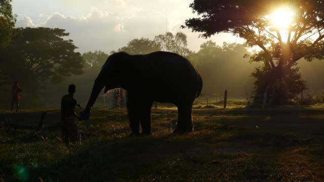 Mahout rijden op een olifant en een olifant bad nemen in de rivier