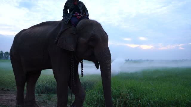 mahout riding an elephant - elephant seal stock videos & royalty-free footage