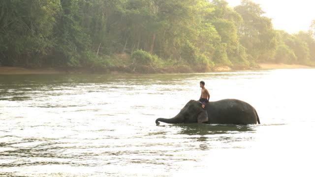 vídeos de stock e filmes b-roll de mahout riding elephants to playing water in the river - elefante