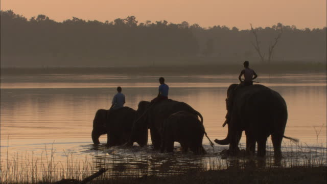 mahouts ride indian elephants into a lake. - madhya pradesh stock videos and b-roll footage