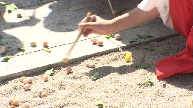 maidens of the kushida shrine gather ginkgo nuts in the courtyard. - fukuoka prefecture stock videos & royalty-free footage