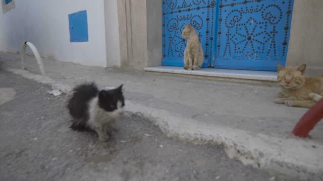 main street, tunis, alley cats - 雑種のネコ点の映像素材/bロール