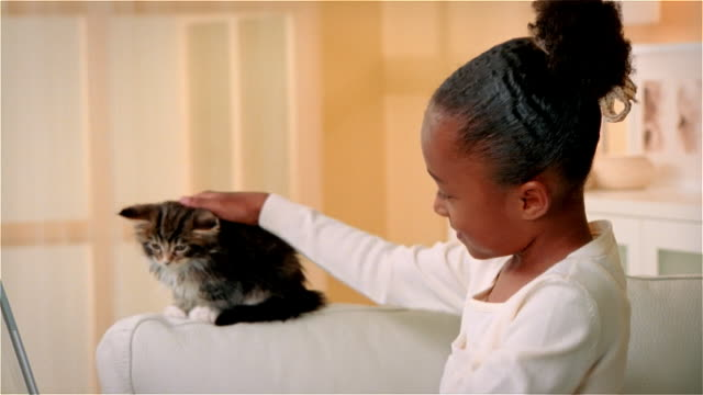 cu, maine coon kitten assisting girl (6-7) using laptop in living room - stroking stock videos and b-roll footage