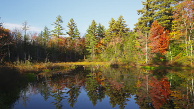 Maine lake with foliage and reflections