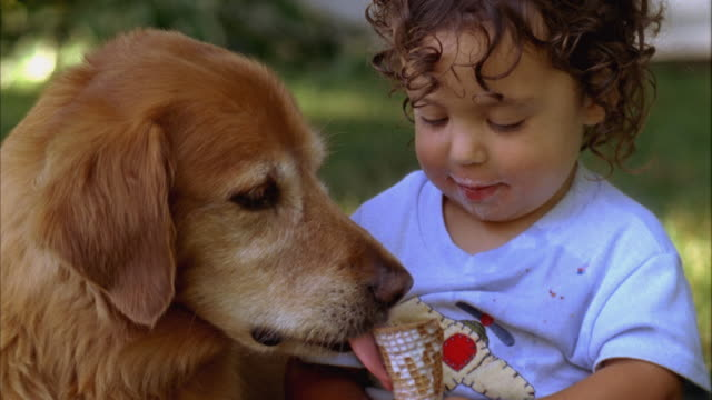 vídeos de stock e filmes b-roll de cu, usa, maine, yarmouth, boy (2-3) sharing ice cream with golden retriever - one animal