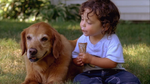 CU, USA, Maine, Yarmouth, Boy (2-3) sharing ice cream with Golden Retriever