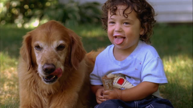 cu, usa, maine, yarmouth, boy (2-3) sharing ice cream with golden retriever - one animal stock videos & royalty-free footage