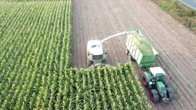 stockvideo's en b-roll-footage met maize harvest in germany at sunset - oogsten