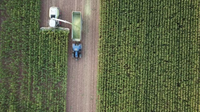 maize harvest in germany at sunset - gröda bildbanksvideor och videomaterial från bakom kulisserna