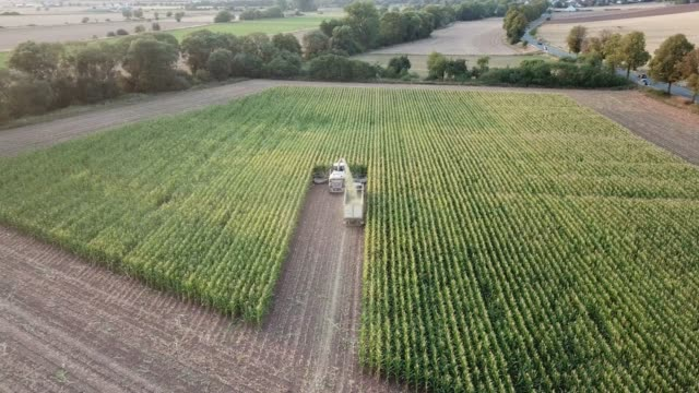 maize harvest in germany at sunset - crop plant stock videos and b-roll footage