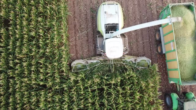 stockvideo's en b-roll-footage met maize harvest in germany at sunset - gewas