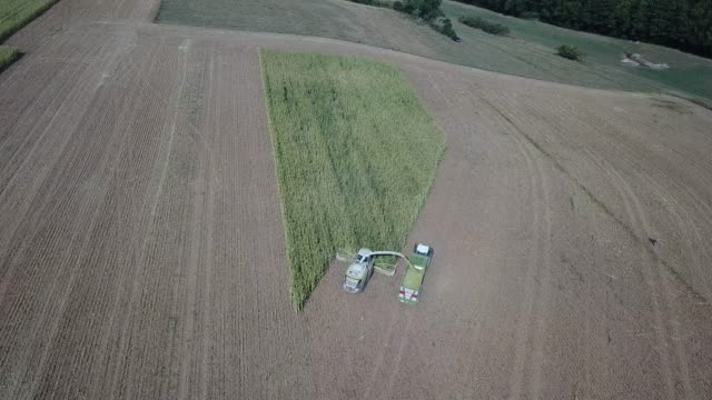 maize harvest in germany - turingia video stock e b–roll