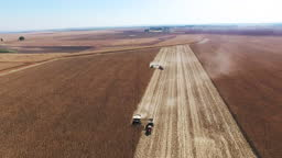 Maize Harvesting in South Africa