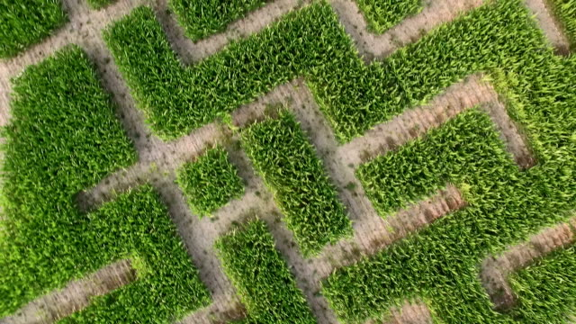 maize maze aerial view - maze stock videos & royalty-free footage
