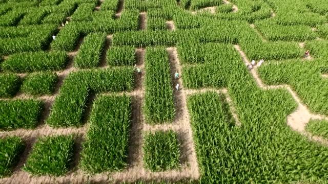Maize Maze Aerial View