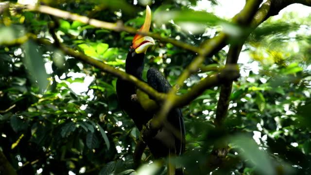 Majestic hornbill hiding among tree branches. Portrait