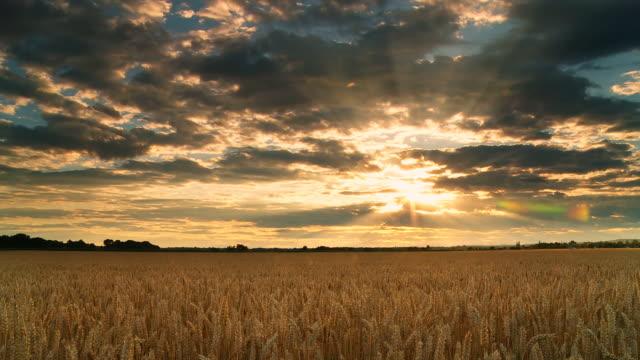 HD :TIME LAPSE (低速度撮影) 雄大な夕日の雲模様の小麦のフィールド