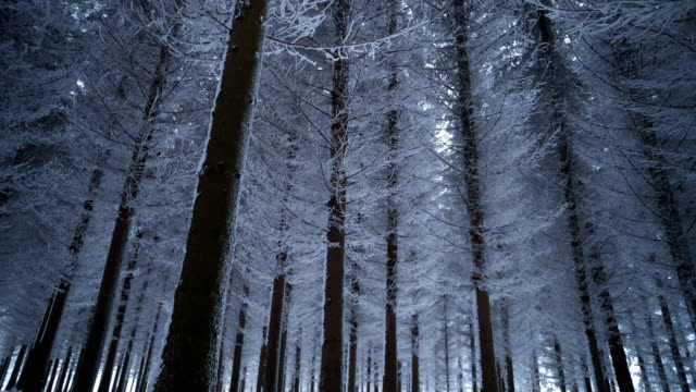 majestic winter forest - wide shot stock videos & royalty-free footage