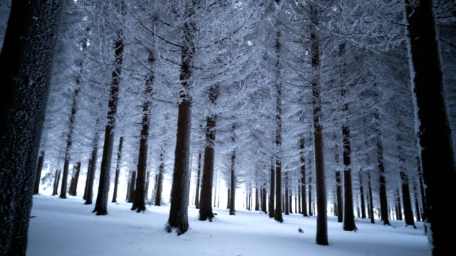 majestic winter forest - panning stock videos & royalty-free footage