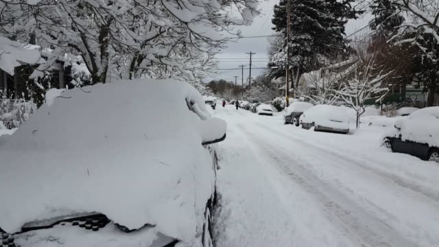 a major snowstorm buried portland under a foot of snow oregon gov kate brown declared a state of emergency wednesday due to the storm conditions it... - portland oregon fall stock videos & royalty-free footage