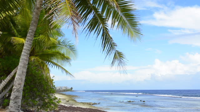 majuro marshall islands beach with palm trees and ocean romantic scene - marshall islands stock videos & royalty-free footage