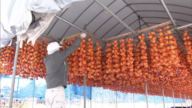 Making Dried Persimmons in Aomori, Japan