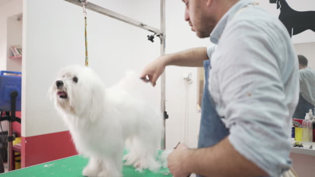 making every pet's visit as pleasant as possible - working animal stock videos & royalty-free footage