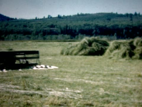 1950 making hay with horses and tractors - hay stack stock videos & royalty-free footage