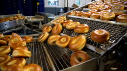 Making of the fresh hot tasty bagels at the backery's factory - bagels are transporting for sorting on the conveyor.