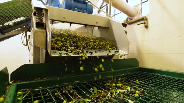 making olive oil, olives going inside crusher factory - black olive stock videos & royalty-free footage