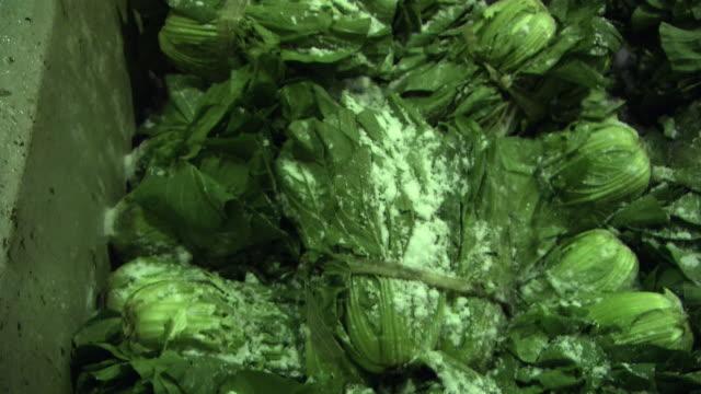 vídeos de stock, filmes e b-roll de making pickles called hiroshimanazuke, hiroshima, japan - conserva