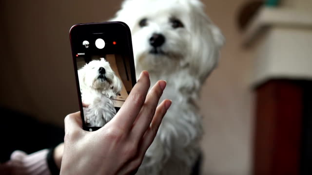 making selfie for puppy - photographing stock videos & royalty-free footage