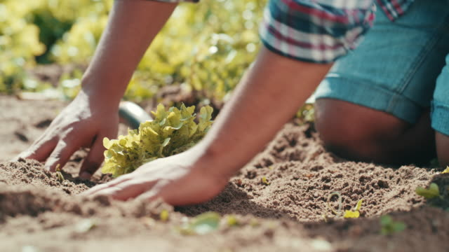 vídeos de stock, filmes e b-roll de certificando-se de que todas as raízes estão cobertas - ranch
