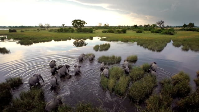 making their way through the water - africa stock videos & royalty-free footage