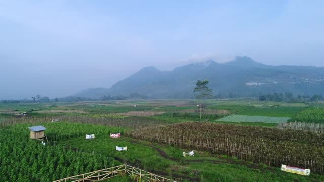 Malang east Java.
