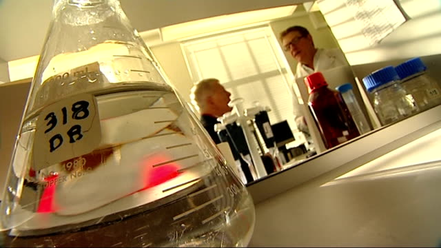 vidéos et rushes de malaria deaths fall / new vaccine introduced england london reporter with colin sutherland in laboratory sutherland speaking with reporter close shot... - animal microscopique