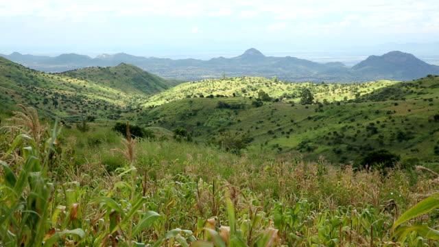 malawi cornfields - malawi stock videos & royalty-free footage