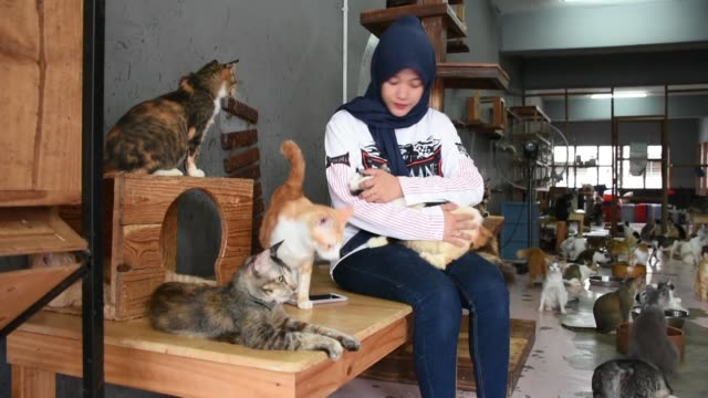 malaysian family has been looking after hundreds of cats and dogs with great enthusiasm paying for all their needs, which cost over $3,500 every... - four animals stock videos & royalty-free footage