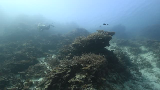 maldives reef - 数匹の動物点の映像素材/bロール