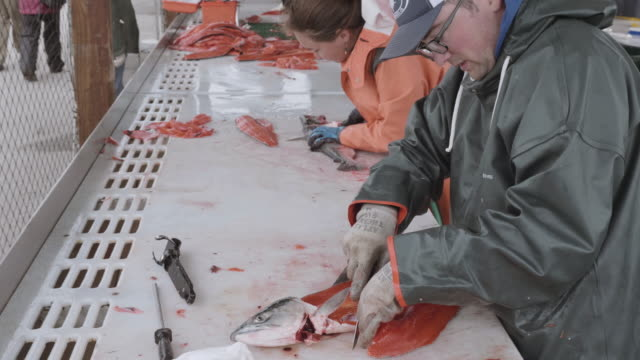 UHD 4K: Male and Female adults cleaning and filleting salmon