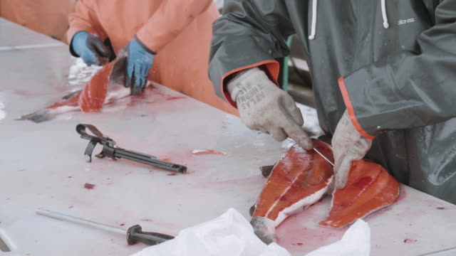 uhd 4k: male and female adults cleaning and filleting salmon - kitchen knife stock videos and b-roll footage