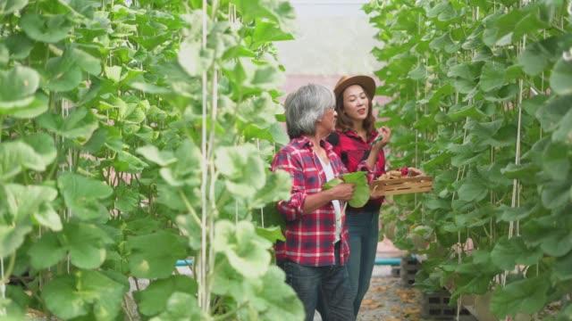 vídeos y material grabado en eventos de stock de hombre y mujer granjero hablando de las plantas en una granja orgánica - oficio agrícola