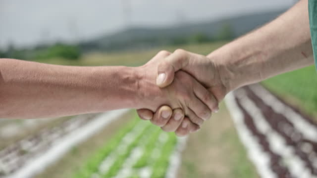 male and female shaking hands at the lettuce field - handshake stock videos & royalty-free footage