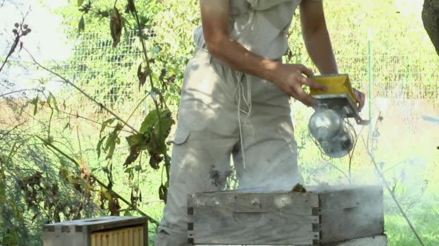 vídeos de stock e filmes b-roll de cu, male beekeeper smoking beehive, mid section, joliet, illinois, usa - grupo mediano de animales